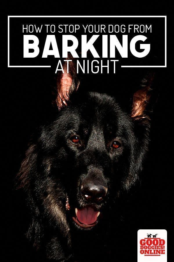 Some Dogs Are Born Naturally Perfect However Most Of Them Will Require Some Guidance You Need To Utilize Th In 2020 Dog Barking At Night Stop Dog Barking Dog Barking