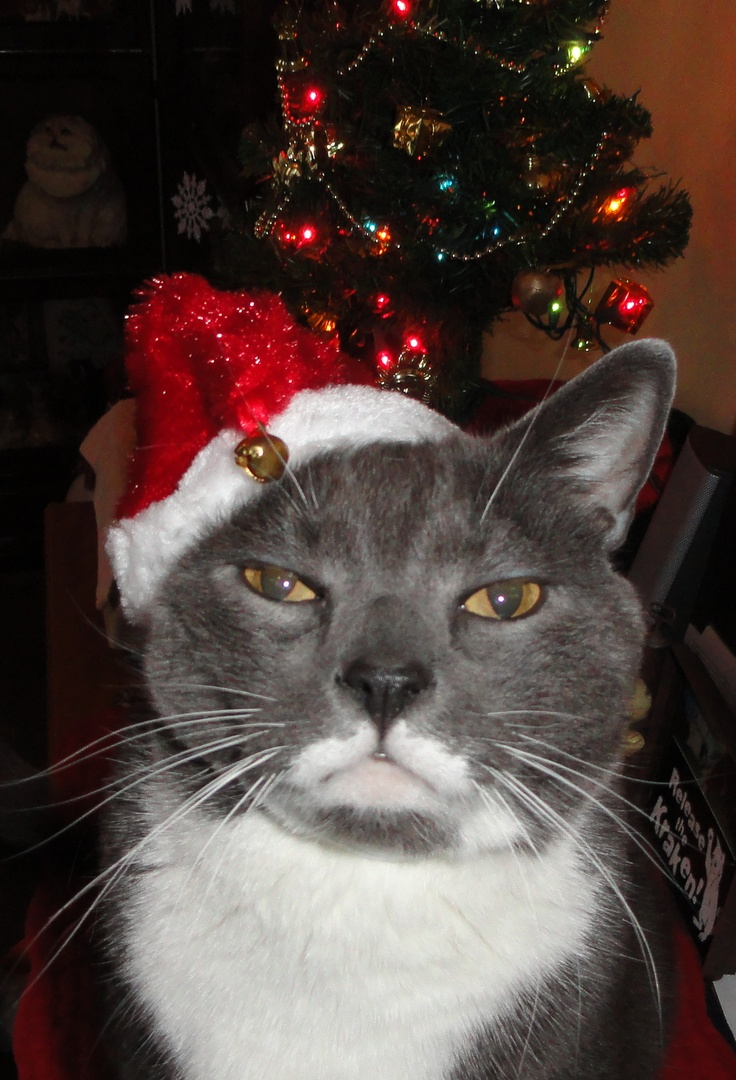 479 Best Fun Holiday Cats Christmas Cats Images On