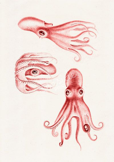 Wall hanging Baby octopus trio sea life poster by seasideprints