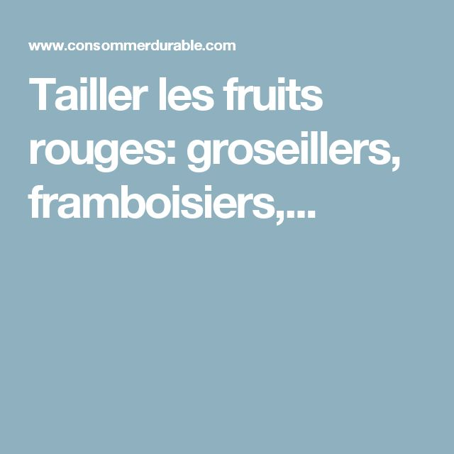 Tailler les fruits rouges: groseillers, framboisiers,...