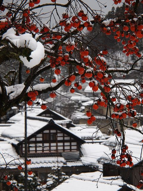 Persimmon and Snow scene by yubomojao, via Flickr