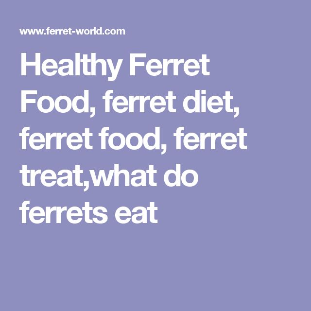 Healthy Ferret Food, ferret diet, ferret food, ferret treat,what do ferrets eat