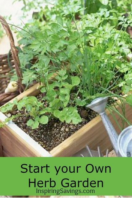 ideas about Kitchen Herb Gardens on Pinterest Patio