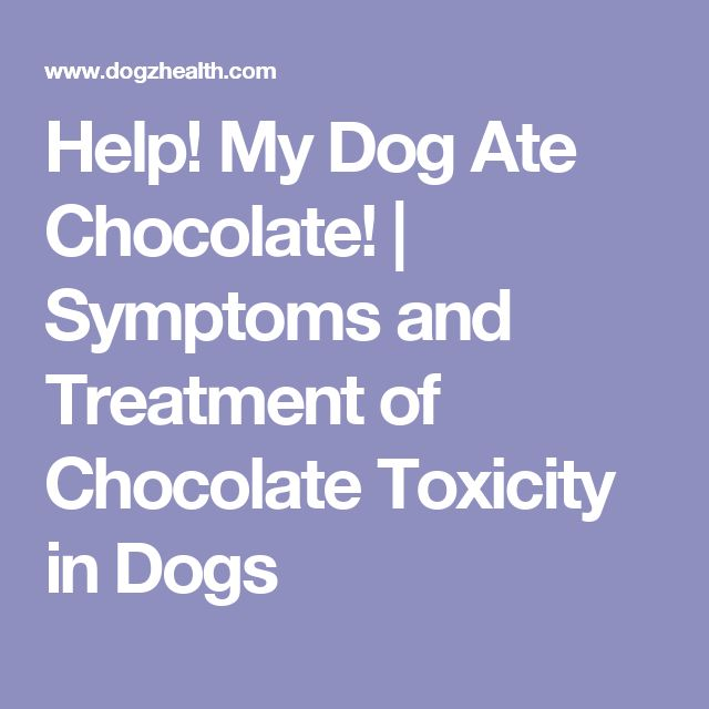 Help! My Dog Ate Chocolate! | Symptoms and Treatment of Chocolate Toxicity in Dogs