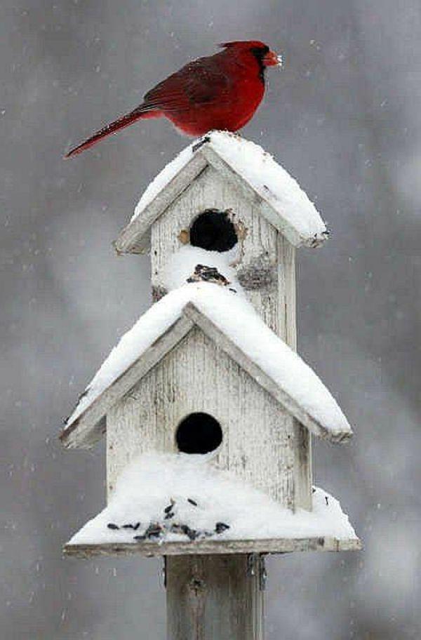 holz umweltfreundlich vogelhaus selber bauen winter