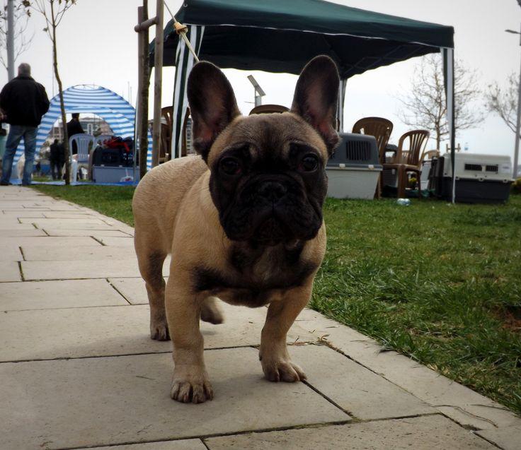ELIE DOG SHOW BEST BABY