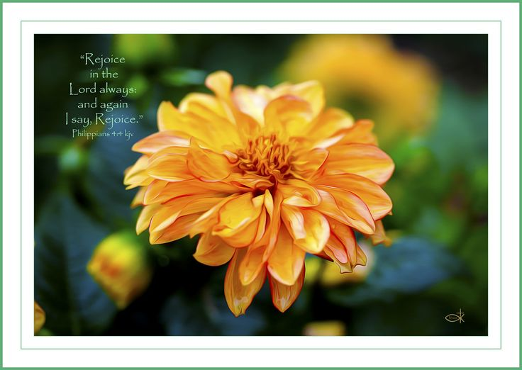Philippians 4:4 kjv | by Joy C.