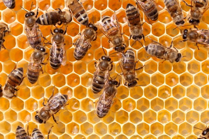 The results of a new risk assessment study by the Environmental Protection Agency has forced the agency to conclude that neonicotinoids have a detrimental impact on pollinators, including honey bees.