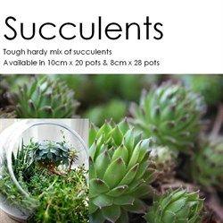 Shrubs, Foliage & Grasses