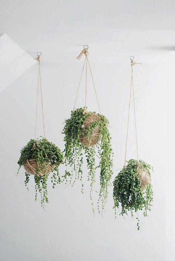 So cool! Pflanzen, die von der Decke hängen. Schöne Dekoration und die Grünpflanzen sorgen auch noch für gute Luft. Gerade im Winter ist das wichtig!