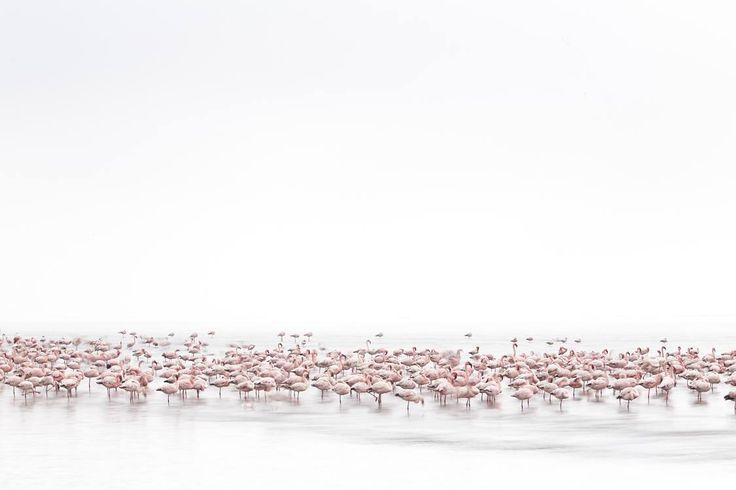 Alessandra Meniconzi, Switzerland, Shortlist Sony World Photography Awards