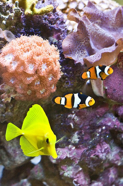 #Tropical #Fish #Supplies http://tropicalfishonline.blogspot.com/2011/06/tropical-fish-supplies.html