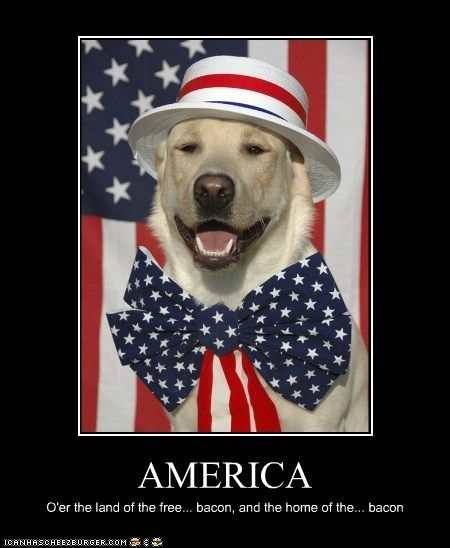 Best 25+ Fourth Of July Meme Ideas On Pinterest | Thank You Cat Meme,  Grumpy Cat Humor And Grumpy Cat Quotes Amazing Pictures