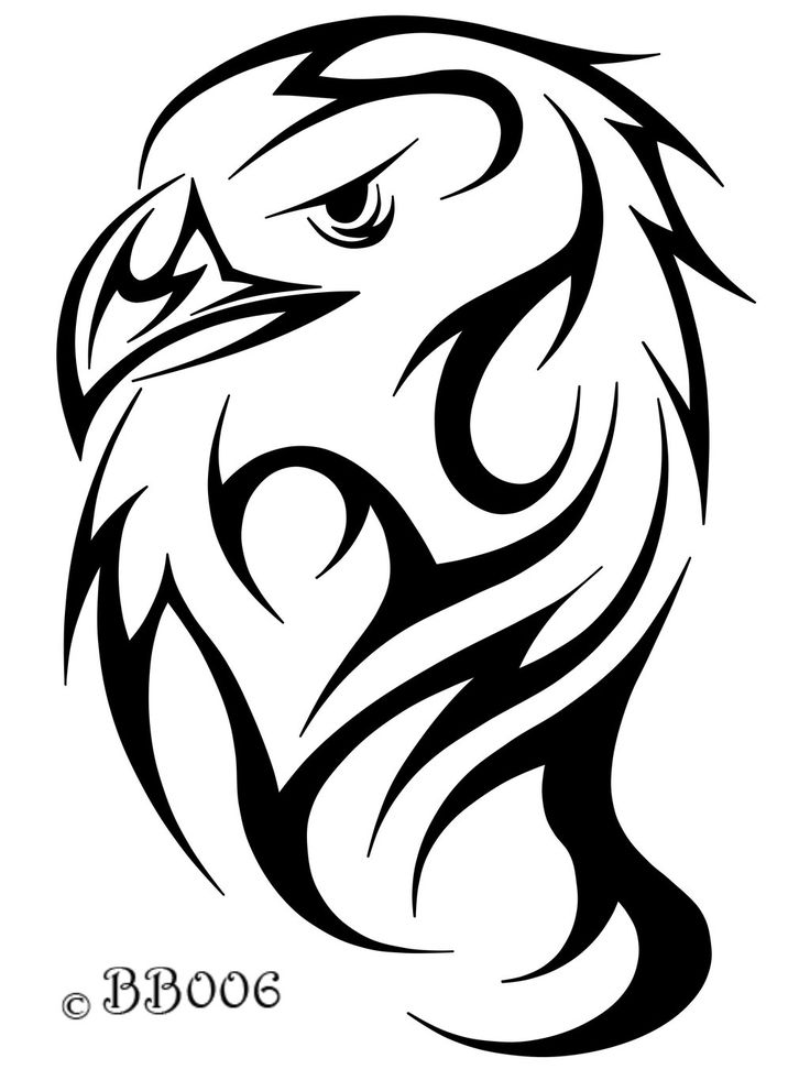Best 25 Eagle Head Ideas On Pinterest Eagle Sketch