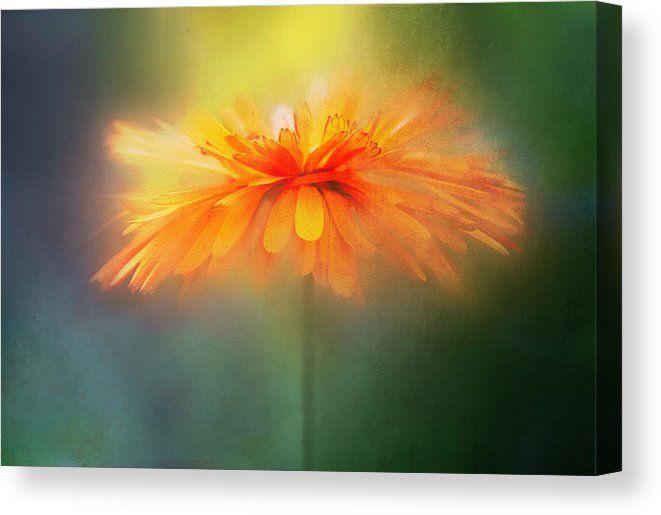Orange Flare Flower Canvas Print Canvas Art By Terry Davis