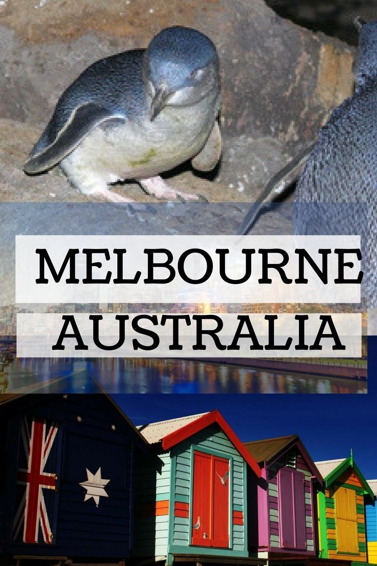 Did you know that we have Little Penguins almost in the heart of the city? So much to see and do in Melbourne, read our top attractions and accommodation guide...