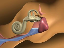 Inner Ear Infection Symptoms in Adults