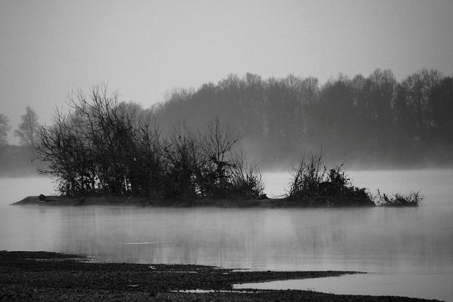 """""""La Nera è profonda e scura. Attraversa il bosco che in essa specchia il suo volto irsuto. Vi galleggiano foglie secche e nei suoi vortici lottano per la vita insetti sventati. La Nera tormenta le radici degli alberi, erode il bosco. Di quando in quando sulla sua superficie scura si formano gorghi, perché è un fiume che sa essere impetuoso e sfrenato."""""""