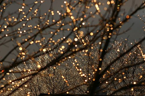 : Christmas Time, Twinkle Lights, Trav'Lin Lights, Night Lights, White Lights, Fairies Lights, Christmas Lights, Trees Branches, Gardens Parties