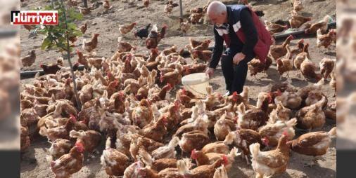 Çiftliğe müzik yayını yapıp yumurta verimini artırdı : Hollandada 40 yıl çalıştıktan sonra kesin dönüş yaparak Aydının Koçarlı İlçesine yerleşen 57 yaşındaki Süleyman Yimsel tavuk çiftliğinde yumurta üretimi yapıyor.  http://www.haberdex.com/ekonomi/Ciftlige-muzik-yayini-yapip-yumurta-verimini-artirdi/89561?kaynak=feeds #Ekonomi   #yumurta #Süleyman #yerleşen #İlçesi #Koçarlı