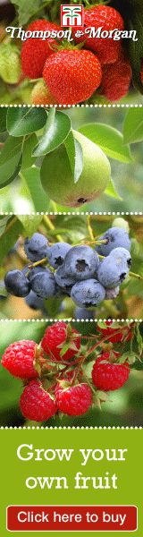 Fruit Trees | Fruit Plants | Fruit Canes | Buy online from Thompson & Morgan