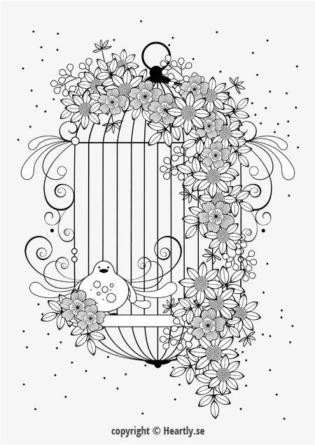bird cage coloring page book mlarbok fr vuxna 012