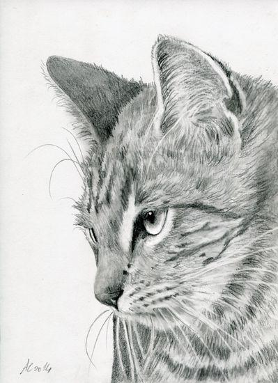Tiger Cat by art-it-art.deviantart.com on @deviantART...Graphit, Bleistift Zeichnung auf 200 Gramm Künstlerpapier... ♥ Tiger Kitten ...original Pencil drawing ...Format: 18 x 25 cm - 7 x 10 inches