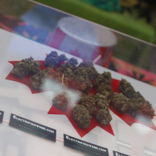 Weed Broke the Canadian Stock Market