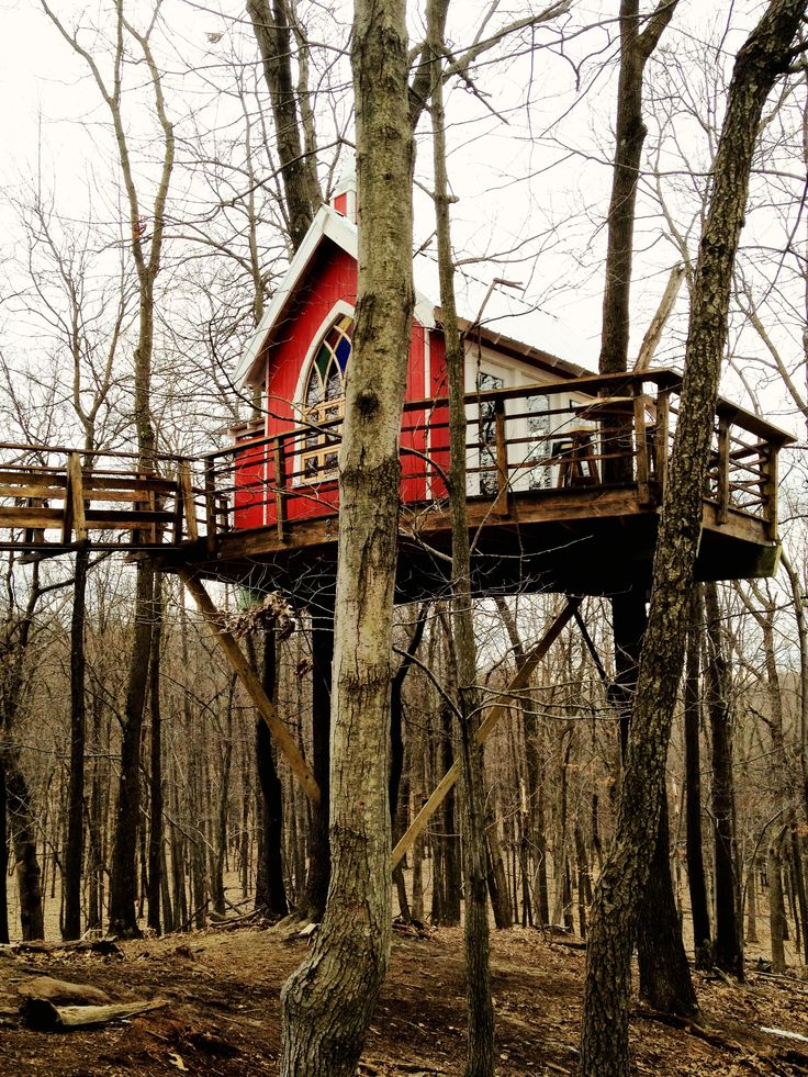 Tree house that was on Animal Planets show call Tree House Masters.  Built by Pete Nelson.