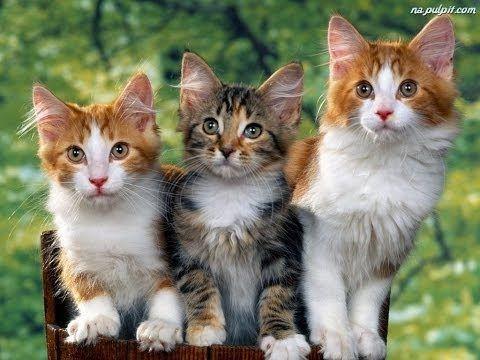 Bajka o trzech kotkach