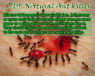 How to Kill Ants DIY Natural Ant Killer