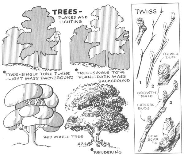 Step 02 trees planes lighting How to Draw Trees, Bark, Twigs, Leaves and Foliage Drawing Tutorial: