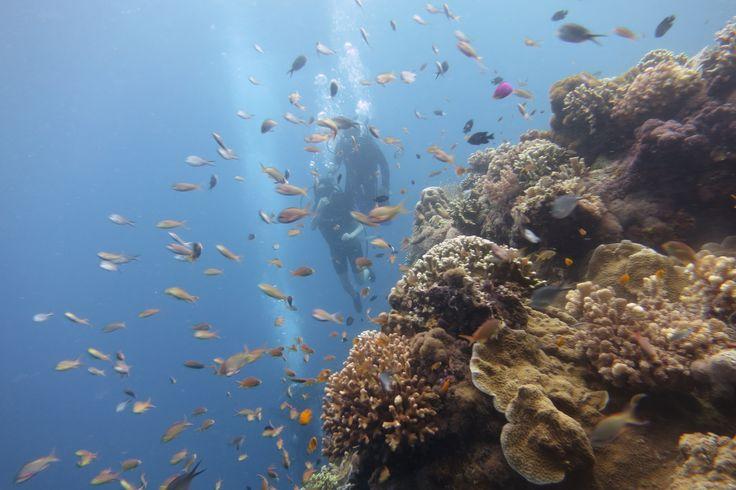 필리핀 보홀~ 그리고 스쿠버 다이빙