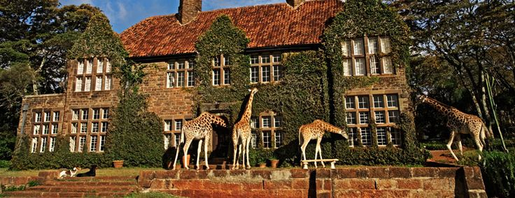 I want to go here!!!!!!  Tamimi – Giraffe Manor -- they come right to your door.  Amazing.