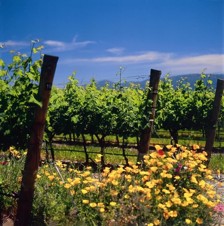 Cono Sur Vineyard and Winery, Chimborongo, Chile