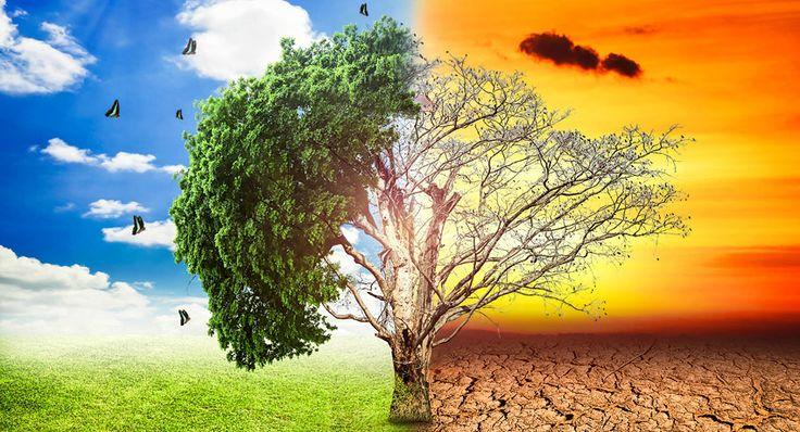 El tan traído y llevado cambio climático no deja de ser objeto de estudio, pero pocas veces podemos encontrar un enfoque tan novedoso e interesante. Según una nueva investigación, la propia Tierra trata de evitar el cambio climático, aunque no lo consigue.