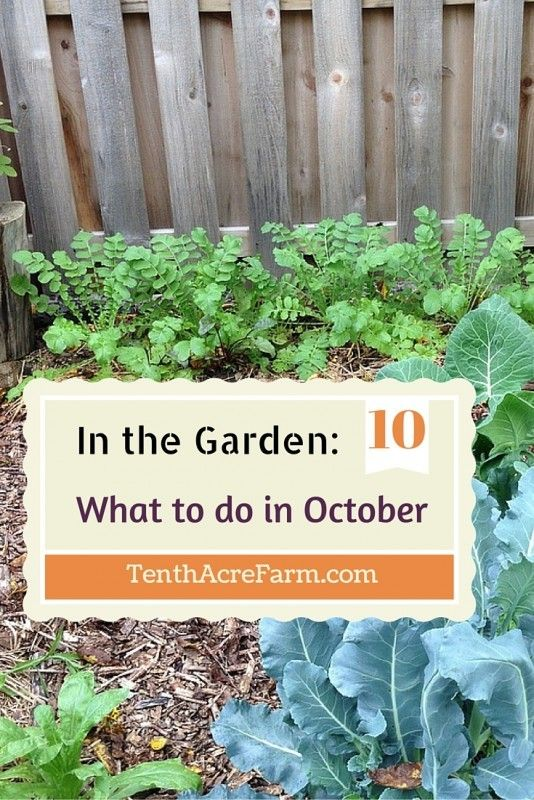 Vegetables To Plant In October