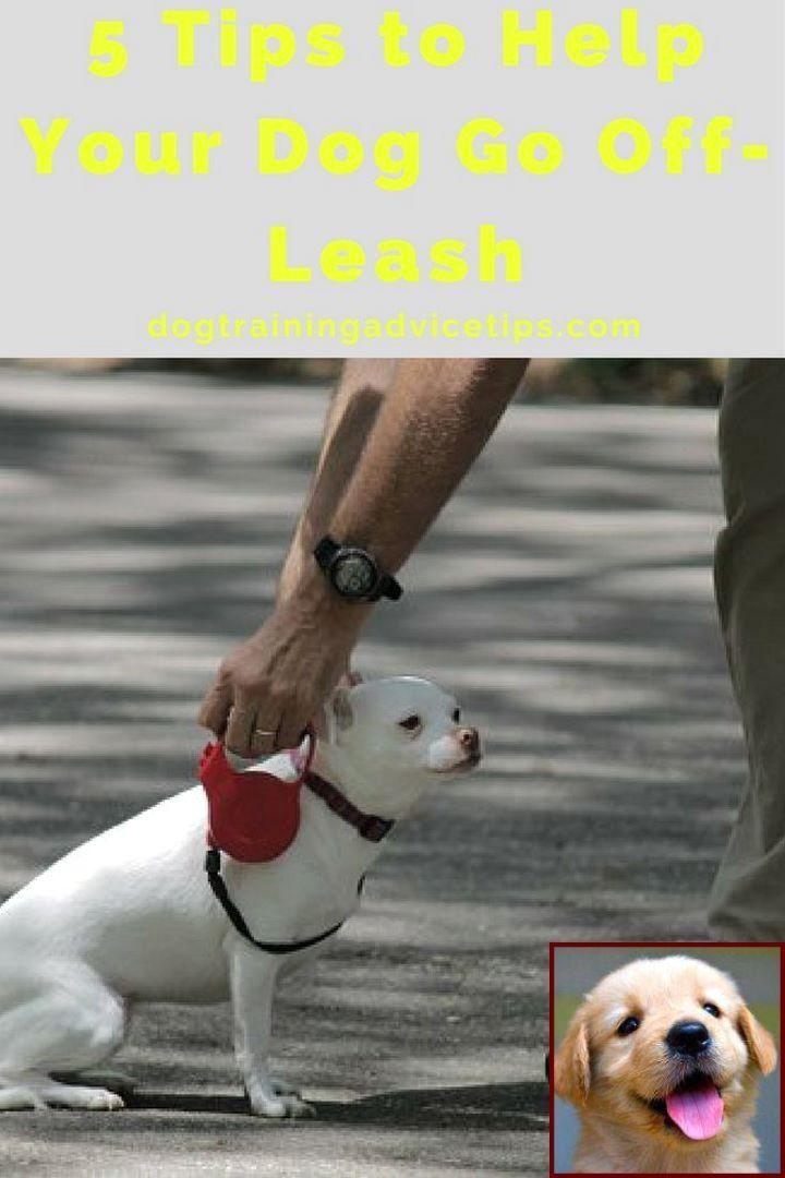 Dog Behavior Training Aggression And Dog Training Courses In Delhi