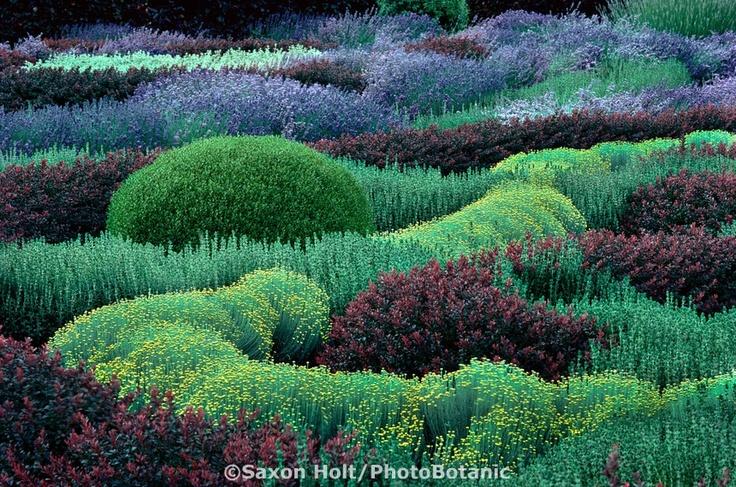 Herb knot garden with Lavender, Santolina, Berberis, Teucrium