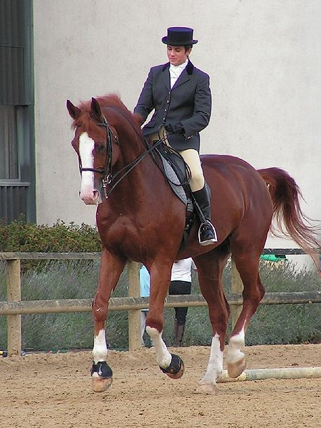 Piet Boon Keuken Warendorf : Westphalian Horse