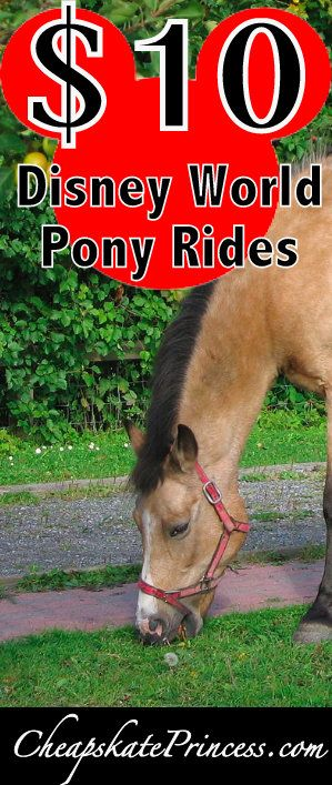 2017 What can you do on Disney property that doesn't cost a fortune? Let the kids take a pony ride!