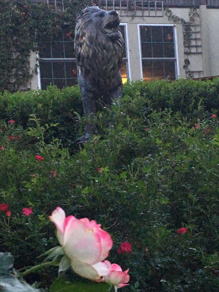 The Lion of Judah in the Israel Prayer Garden 3/31/2017 - Tribe of Judah