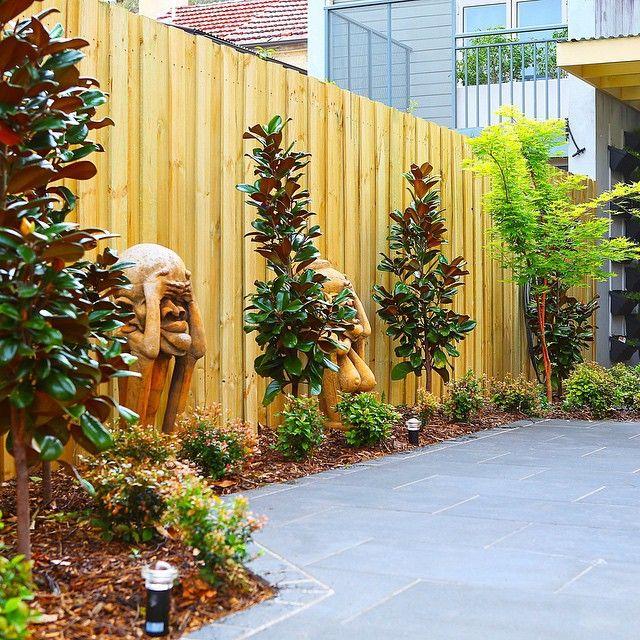 """Feature plants galore in this Balmain courtyard Magnolia 'teddy bears' Maple 'acer senkaki' as the main feature. #bluestone #cobbles #maple…"""