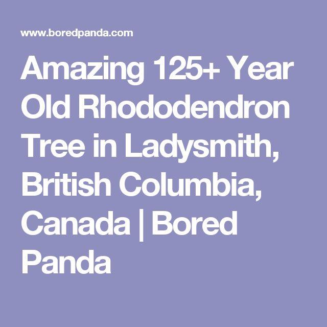 Amazing 125+ Year Old Rhododendron Tree in Ladysmith, British Columbia, Canada | Bored Panda