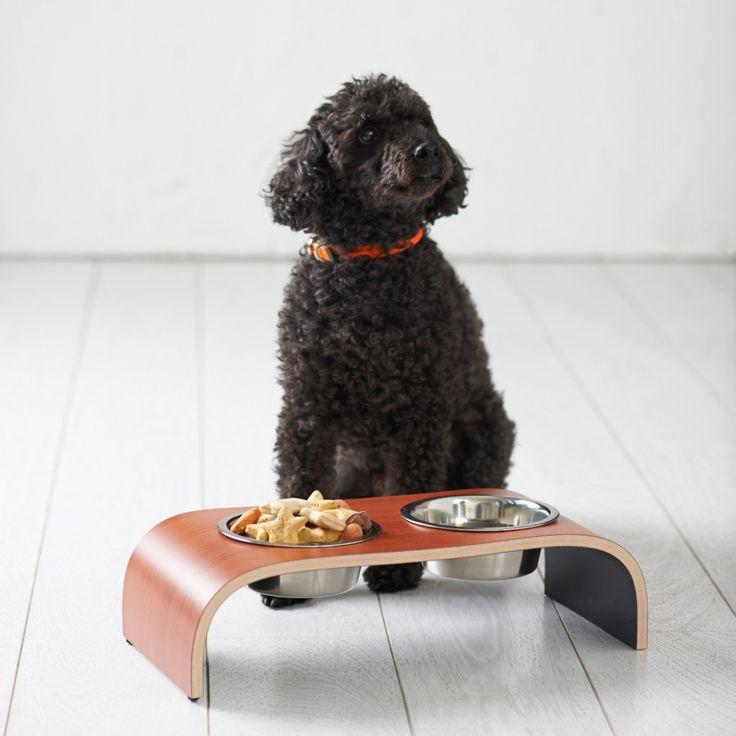 Mini poodle. Kato is cuter though!