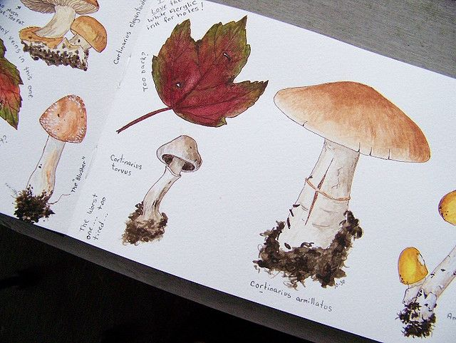 Ideas for nature Journal. The colours are perfect you've really captured the fungi's tones.