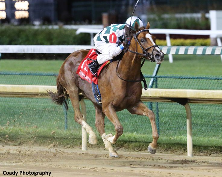 Champion Animal Kingdom Sires First Stakes Winner As Sunny Skies Takes Debutante - Horse Racing News | Paulick Report