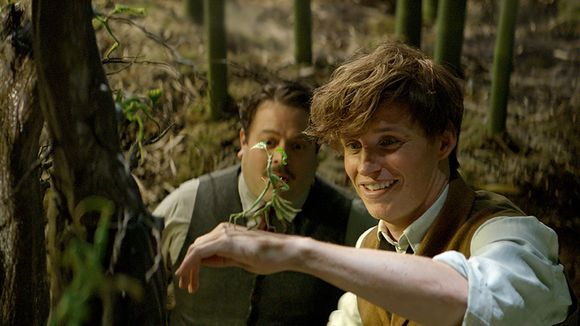 """bespokeredmayne: """"EDDIE AND THE BOWTRUCKLETurns out it's not the Niffler who's Eddie Redmayne's favorite """"beast,"""" as he explains by email to USA Today. Eddie Redmayne is thrilled the tiny, leafy creature Pickett the Bowtruckle gets major screentime..."""