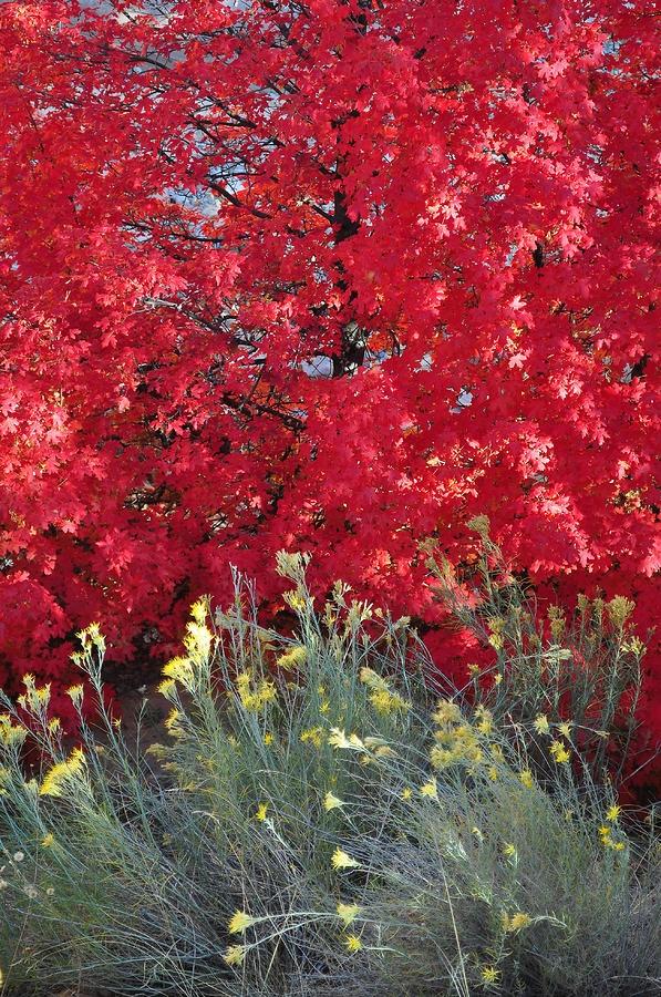 ✮ Autumn Splendor in Zion National Park