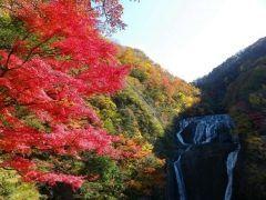 茨城県大子町にある日本三名瀑の1つである袋田の滝は高さ120m幅73mの大きさを誇ります  流れが4段に落下することから別名四度(よど)の滝とも呼ばれています 四季折々にいろいろな表情を見せてくれますが特に秋は滝を囲うようにイロハカエデやオオモミジなどの色鮮やかさは必見です  光と音で演出するライトアップもしており昼間とは全く違った滝の表情が見られますよ   tags[茨城県]
